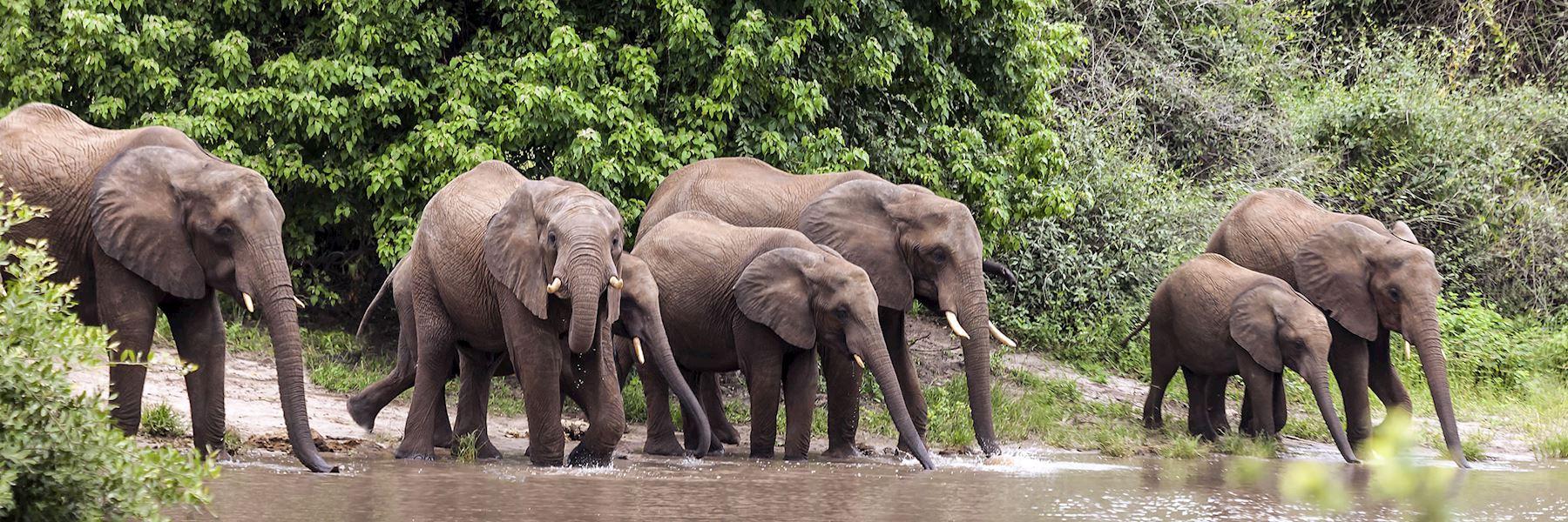 Visit Chobe National Park, Botswana