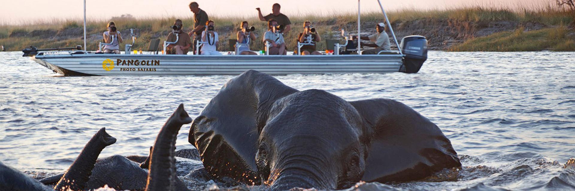 Photographic Safari, Pangolin Safaris, Chobe National Park, Botswana