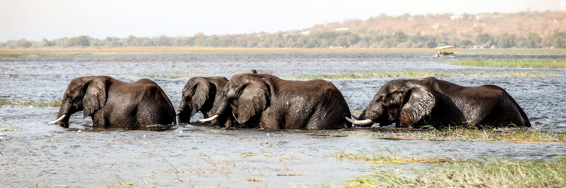 Botswana safaris & vacations