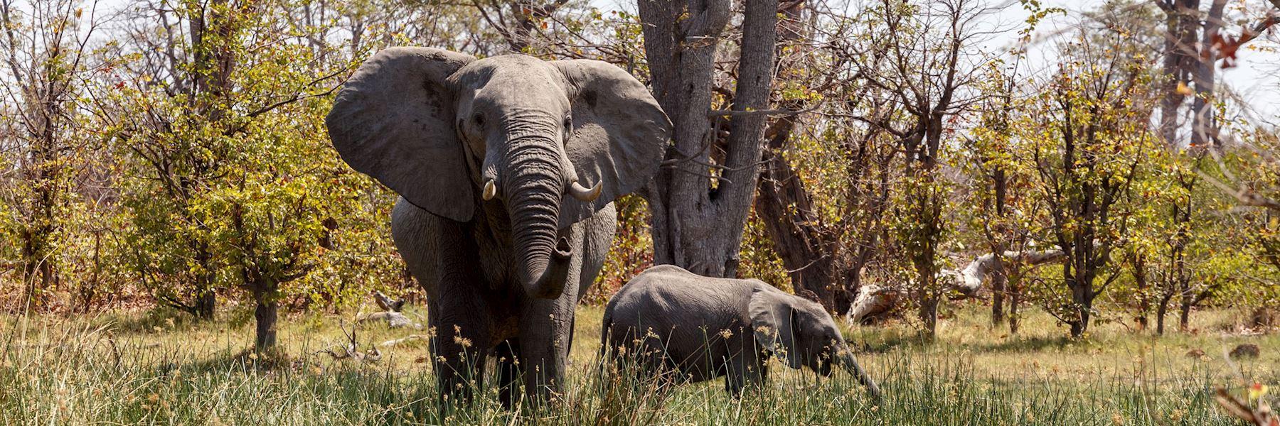 Visit Moremi Wildlife Reserve, Botswana