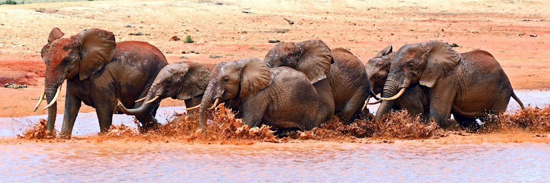 Elephant, Tsavo National Park