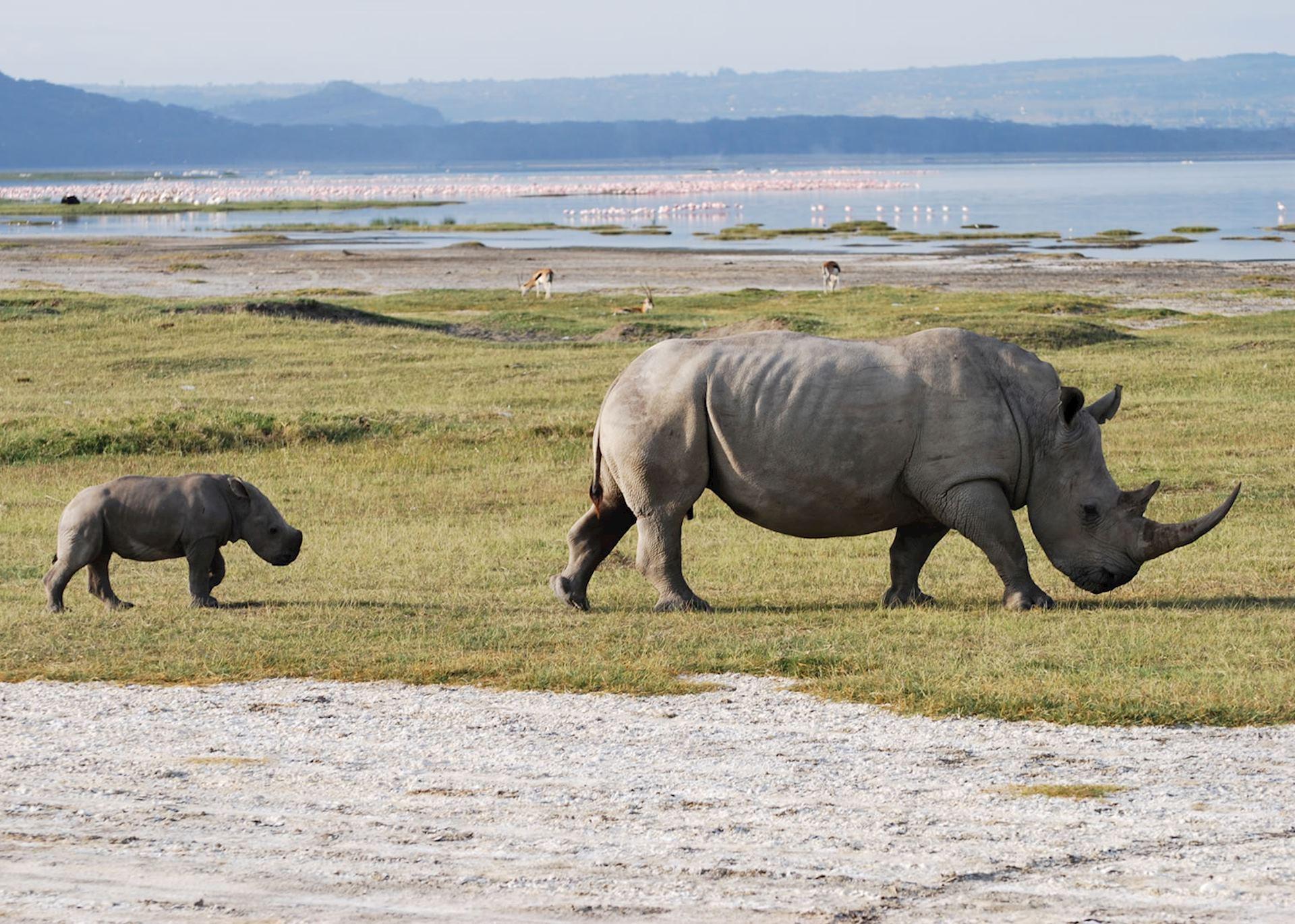 Rhino and her calf, Lake Nakuru
