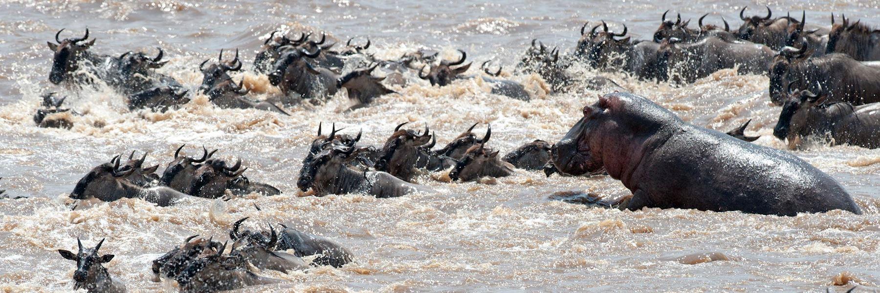 7 Days Masai Mara Wildebeest Safari