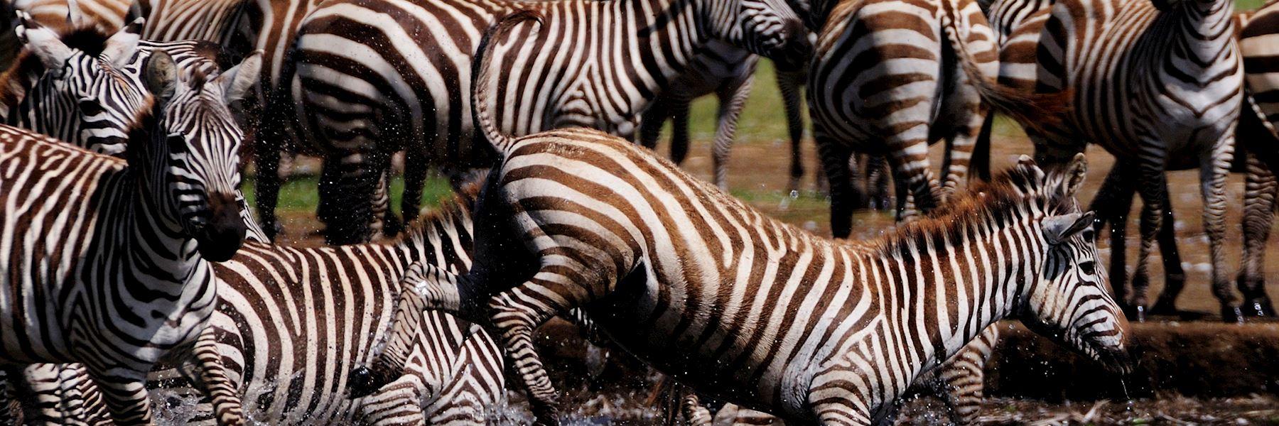 Kenya safaris & holidays