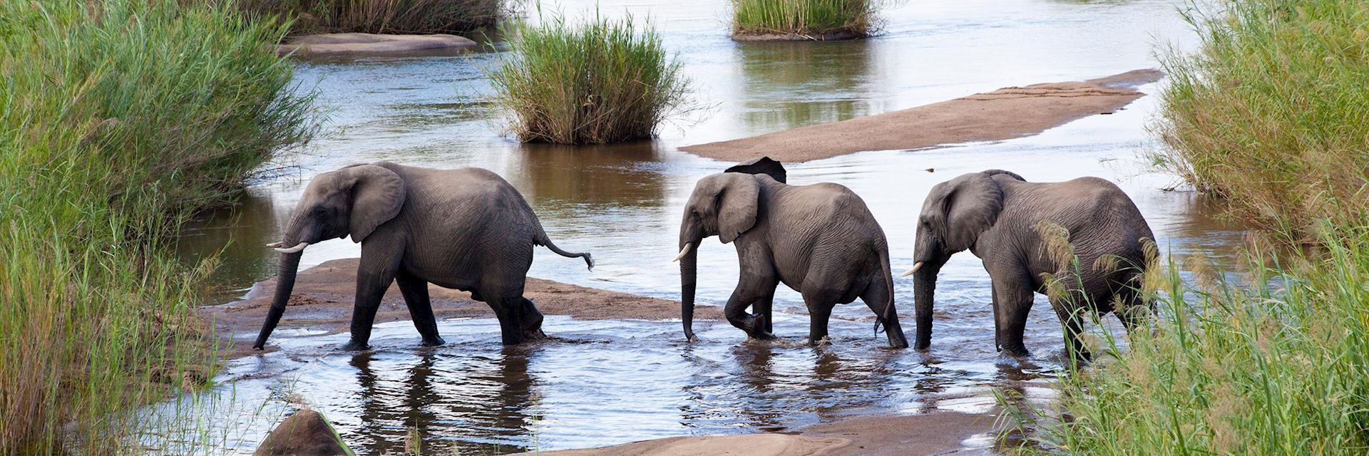 Elephants crossing a river, Kenya