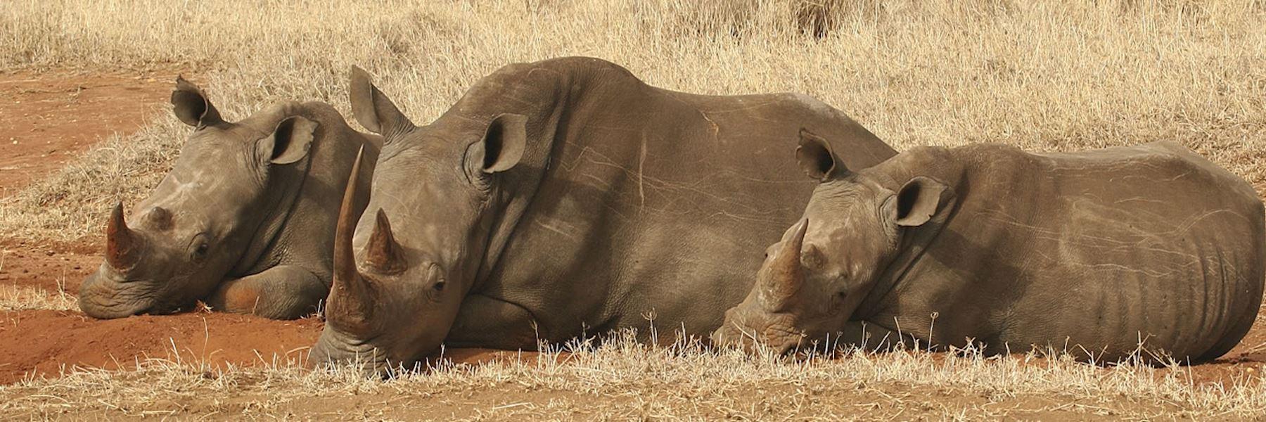 Visit Lewa Wilderness Conservancy, Kenya
