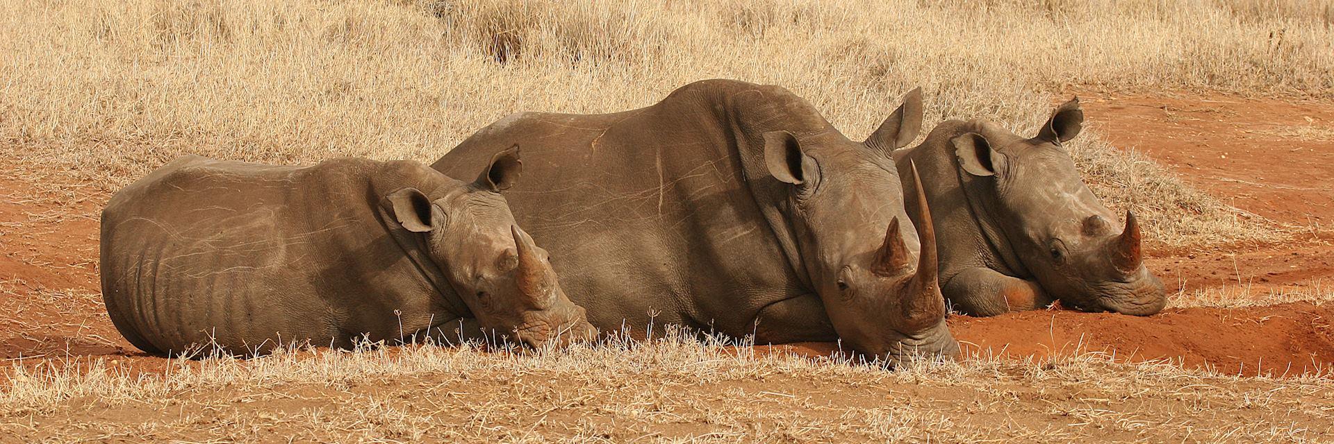 Rhino, Lewa Wilderness Conservancy