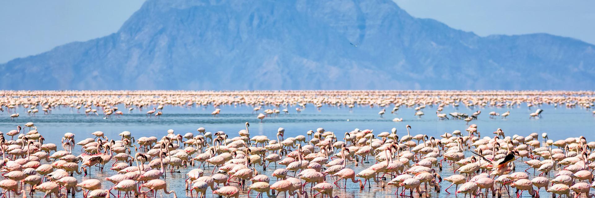 Flamingos near Mount Shompole