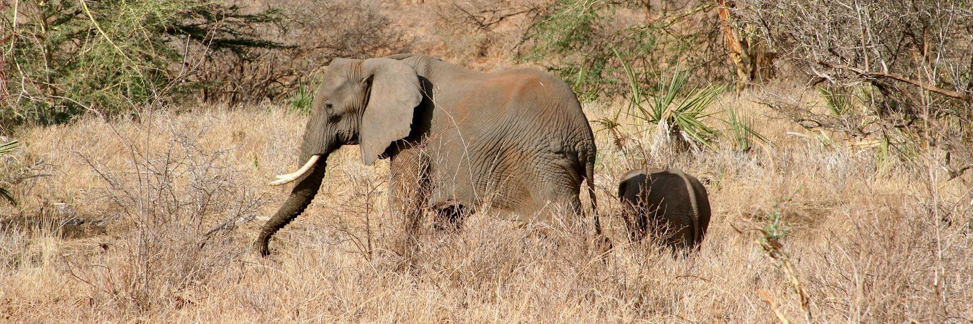 Elephant in the Meru National Park, Kenya