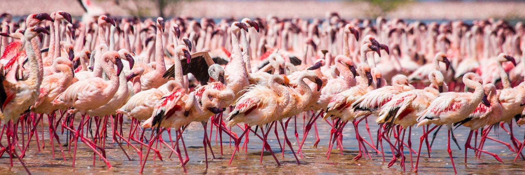 Visit Lake Nakuru, Kenya