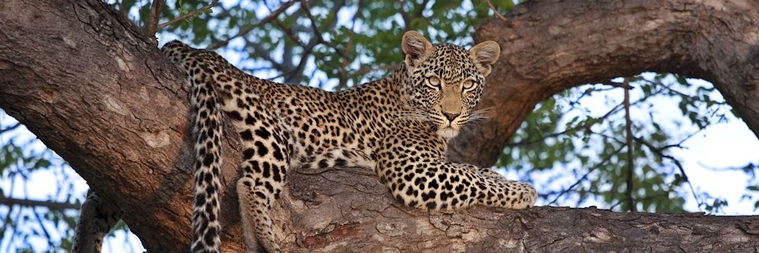 Track the Big Five on safari in South Africa