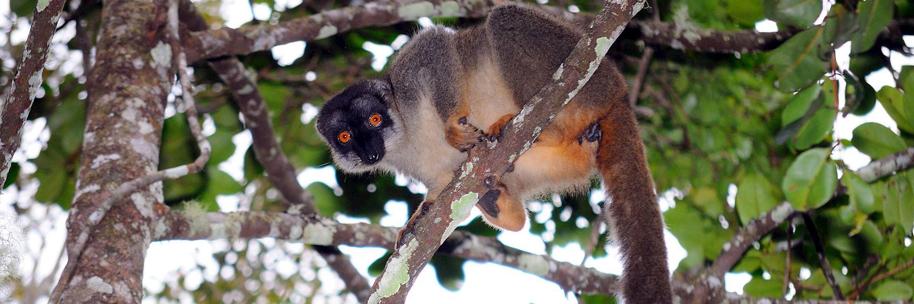 Visit Andasibe National Park (Perinet), Madagascar