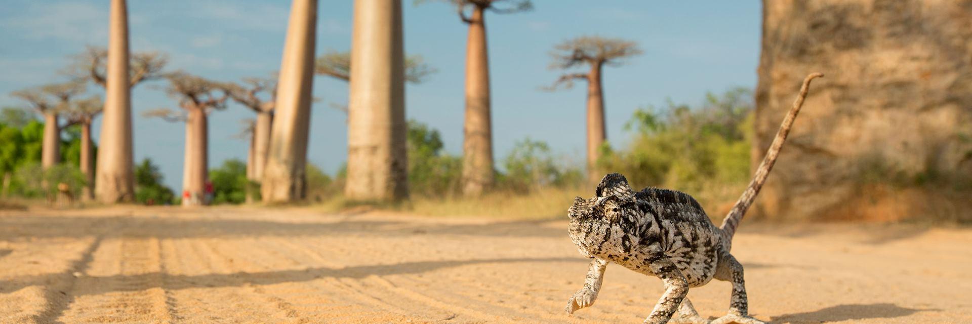 Baobab Beach, Madagascar