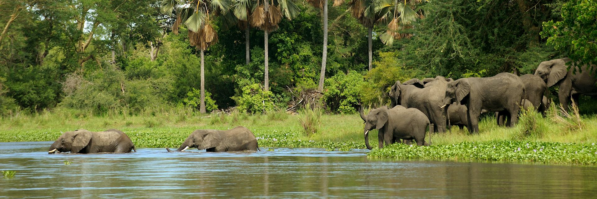 Elephants in Liwonde National Park, Malawi