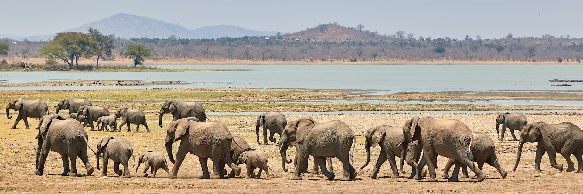 Herd of elephants, Vwaza Marsh