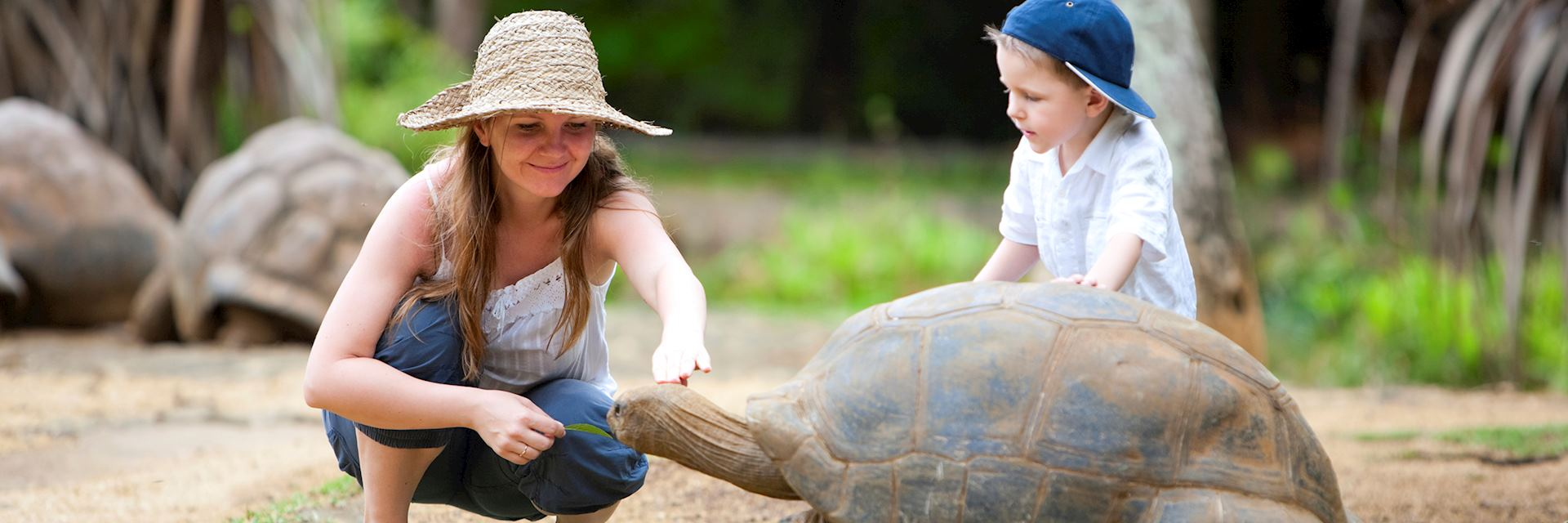 Family feeding with a giant tortoise in Mauritius