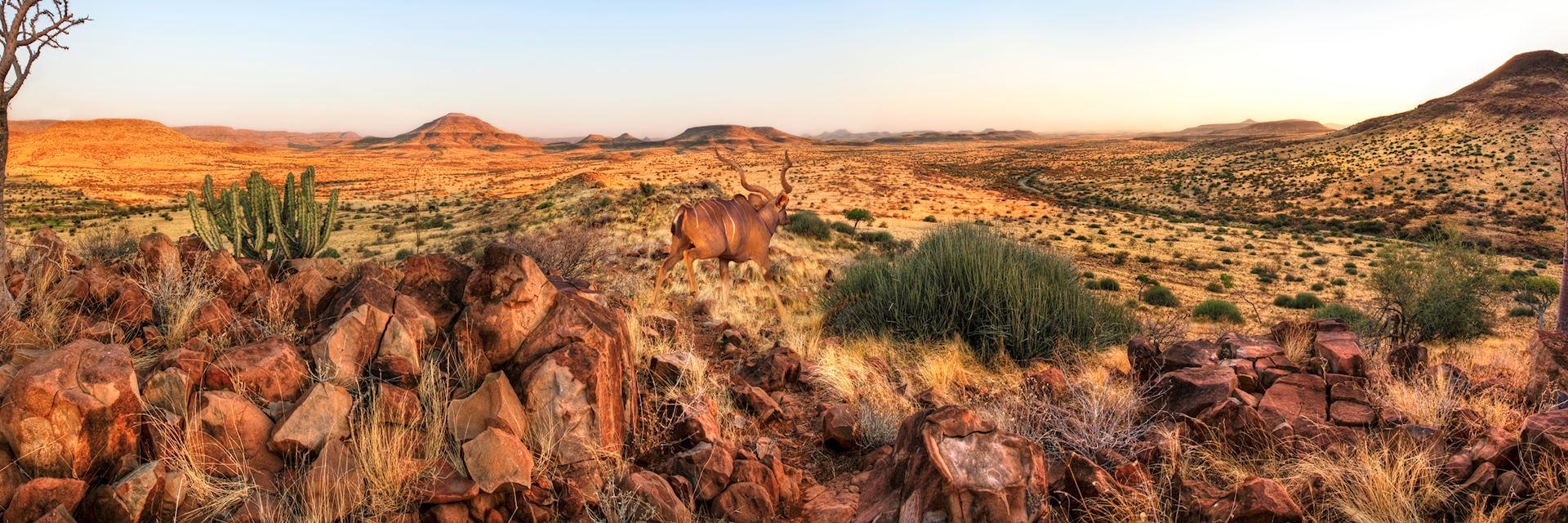 Kudu in Damaraland in Namibia