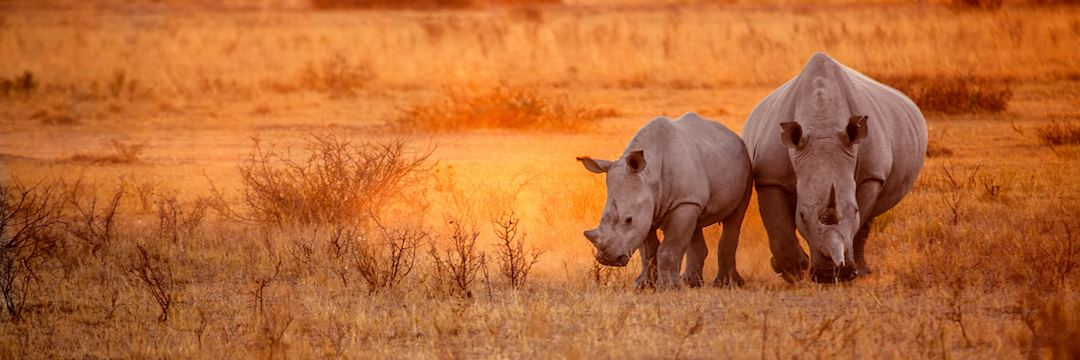 Rhino grazing in Damaraland