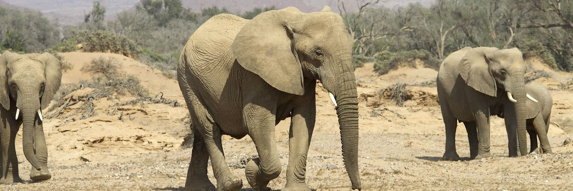 Elephants in Damaraland