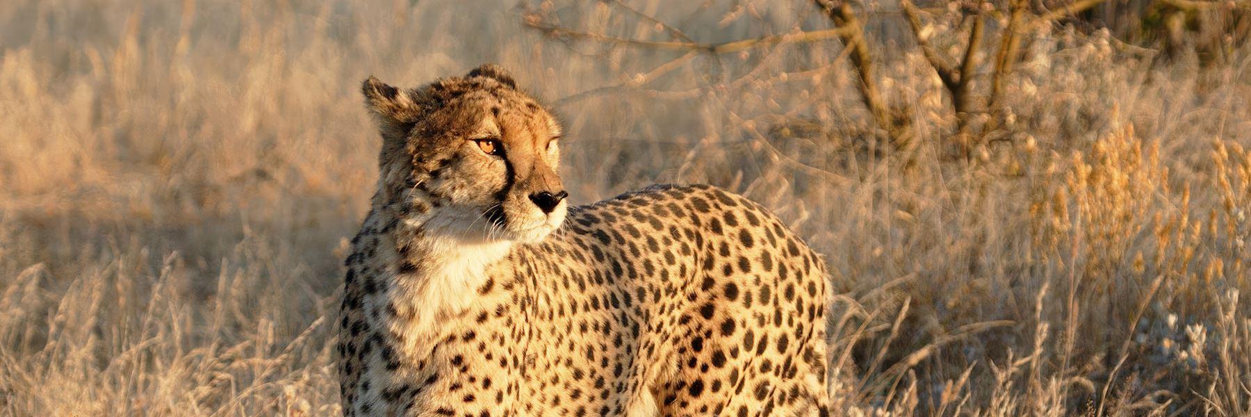 Visit Etosha National Park, Namibia