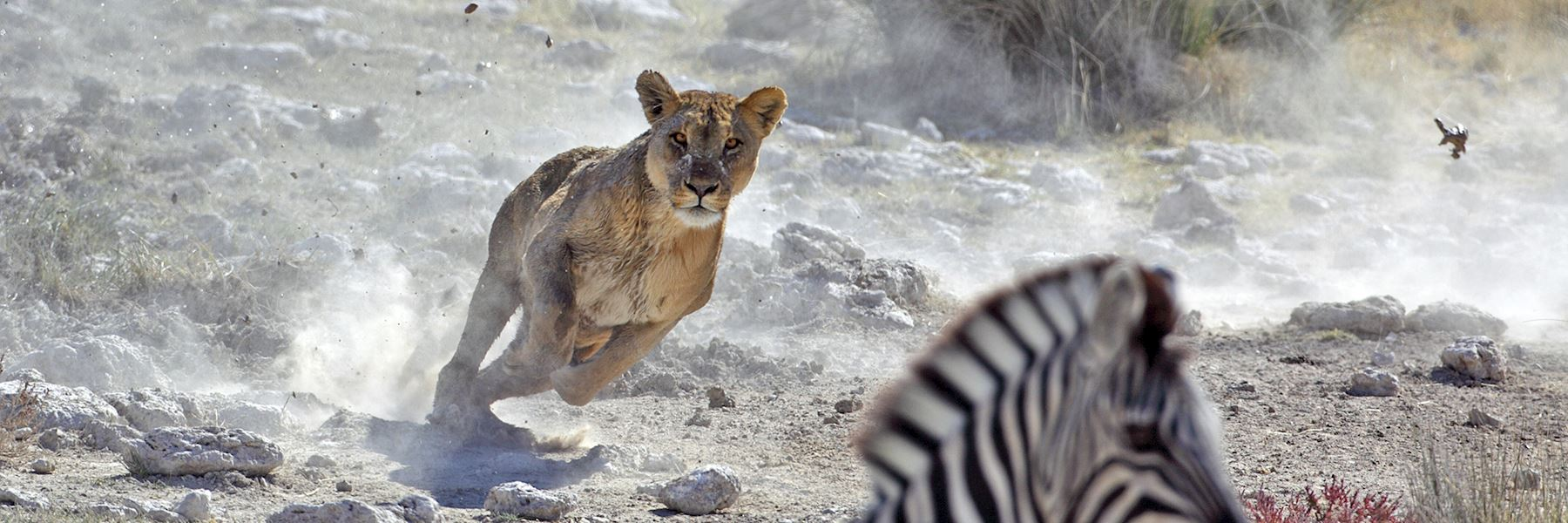 Namibia travel guides