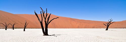 Deadvlei, Namibian desert