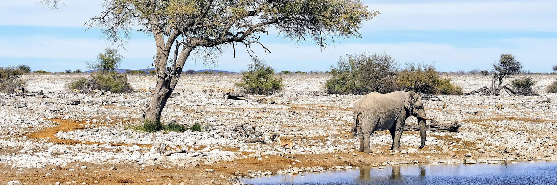 Elephant at waterhole in Etsoha National Park