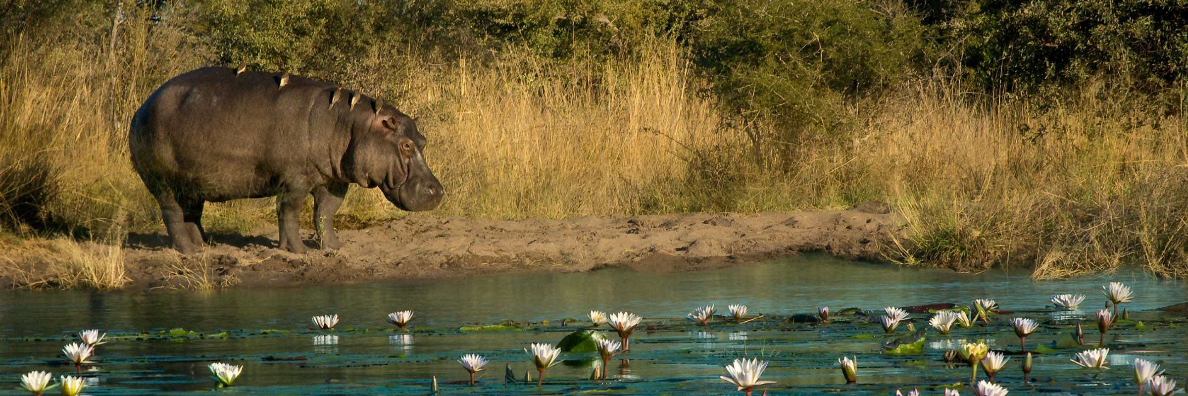 Must see in the caprivi strip understand