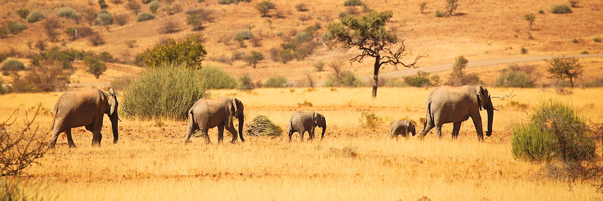 Family of elephants, Namibia