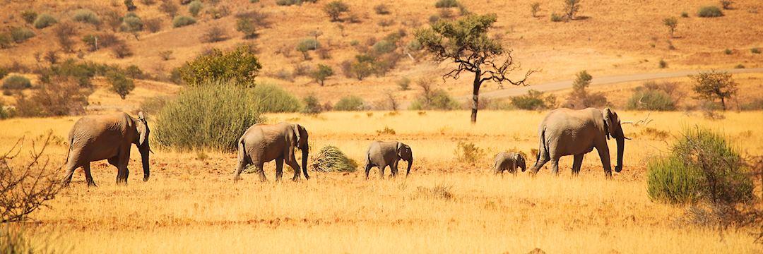 Family of elephants, Namibia