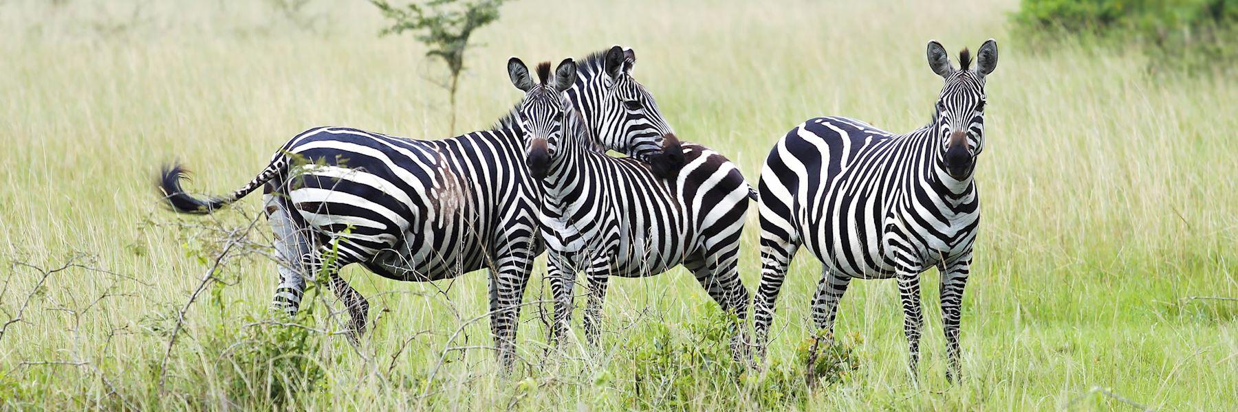 Rwanda travel guides