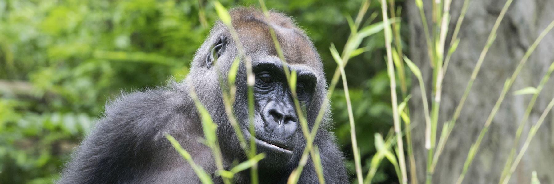 Rwanda vacations