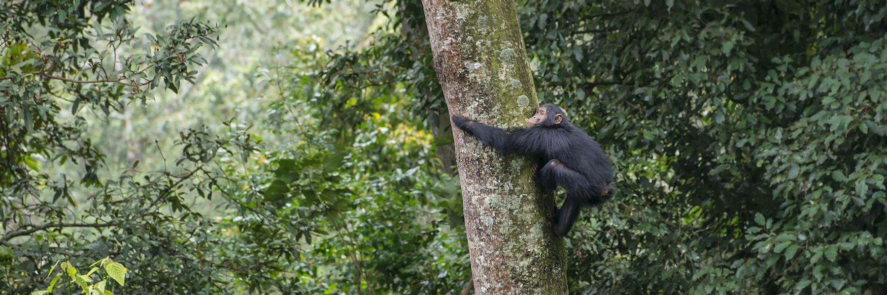Visit Nyungwe Forest, Rwanda