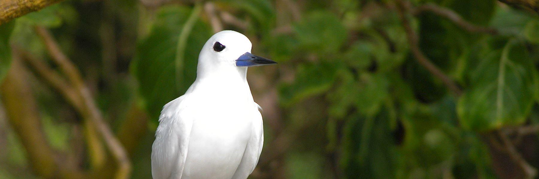 Visit Bird Island, Seychelles
