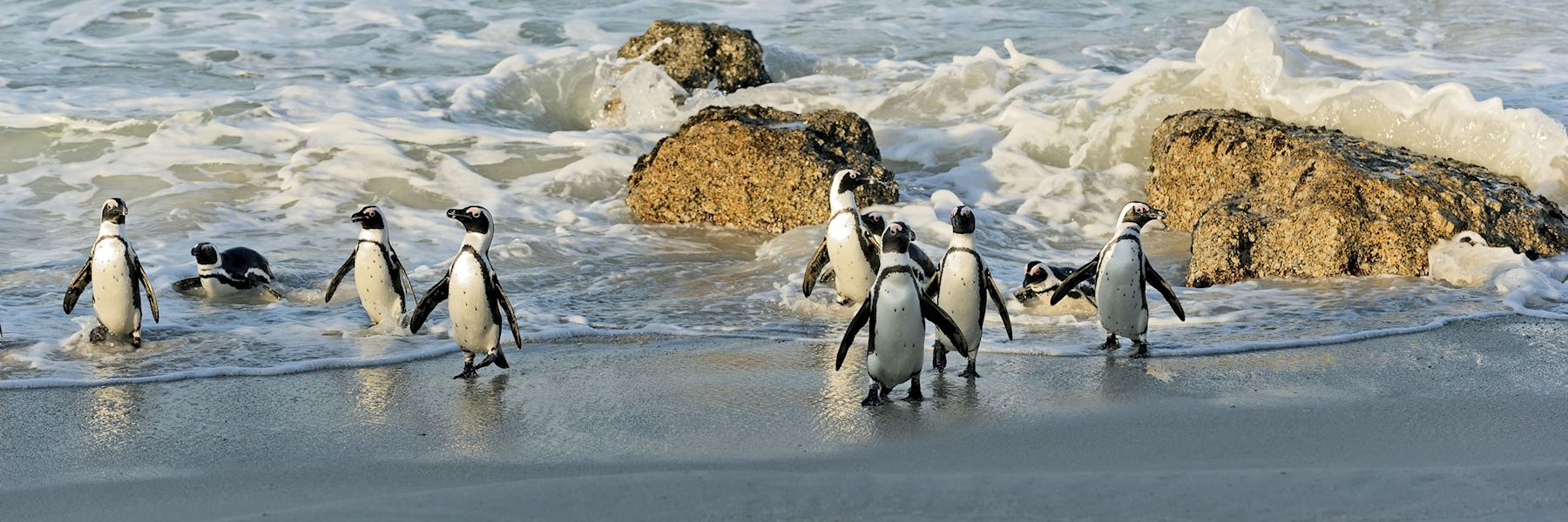 Best Time To Visit South Africa Climate Guide Audley Travel
