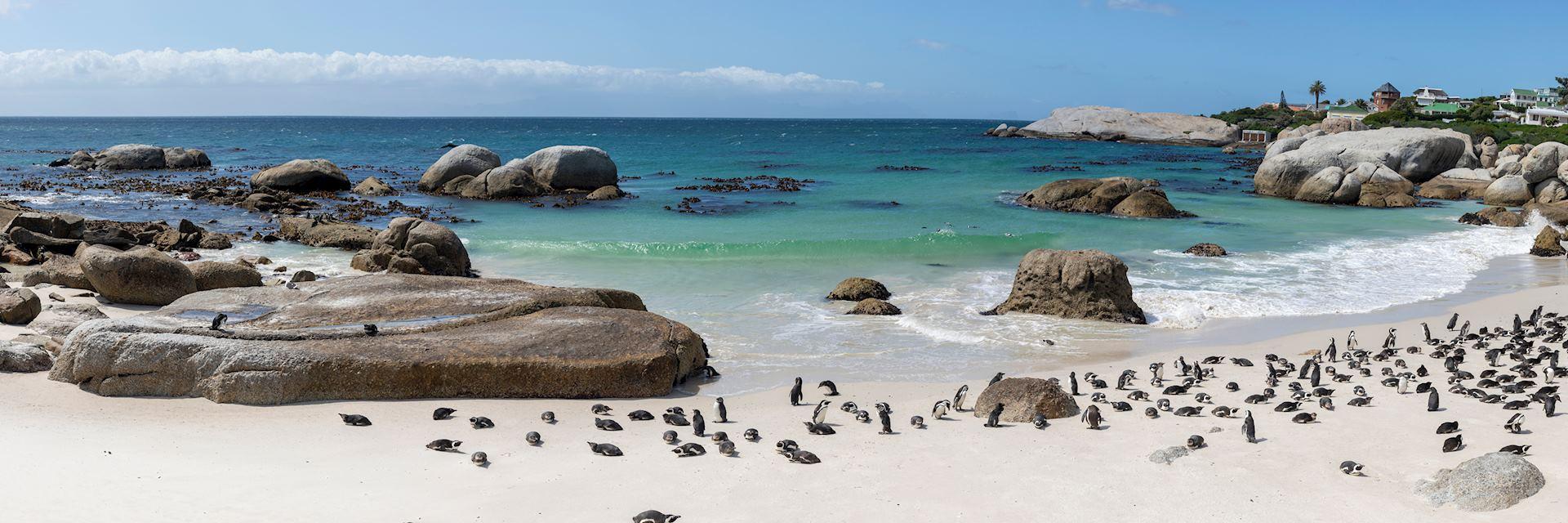 Penguins on Boulder Beach near Cape Town
