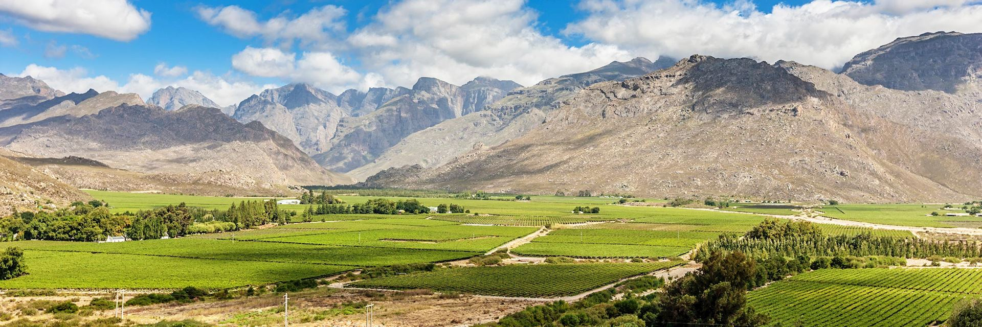 Western Cape winelands, South Africa