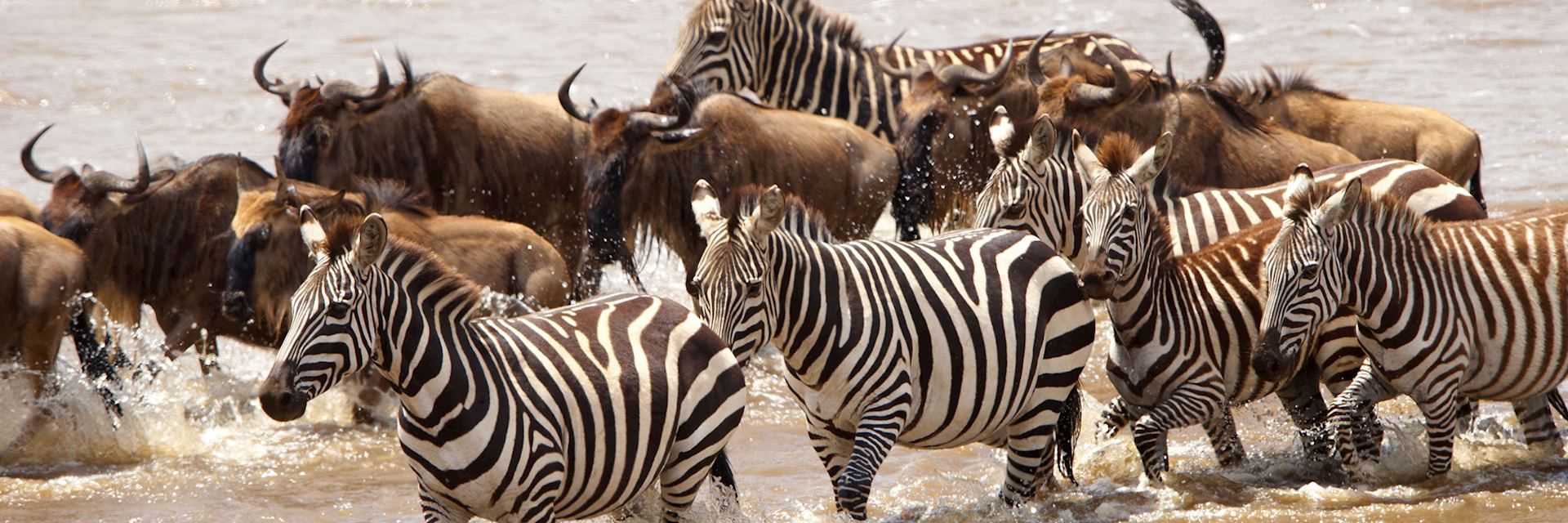 Zebra and wildebeest in South Africa