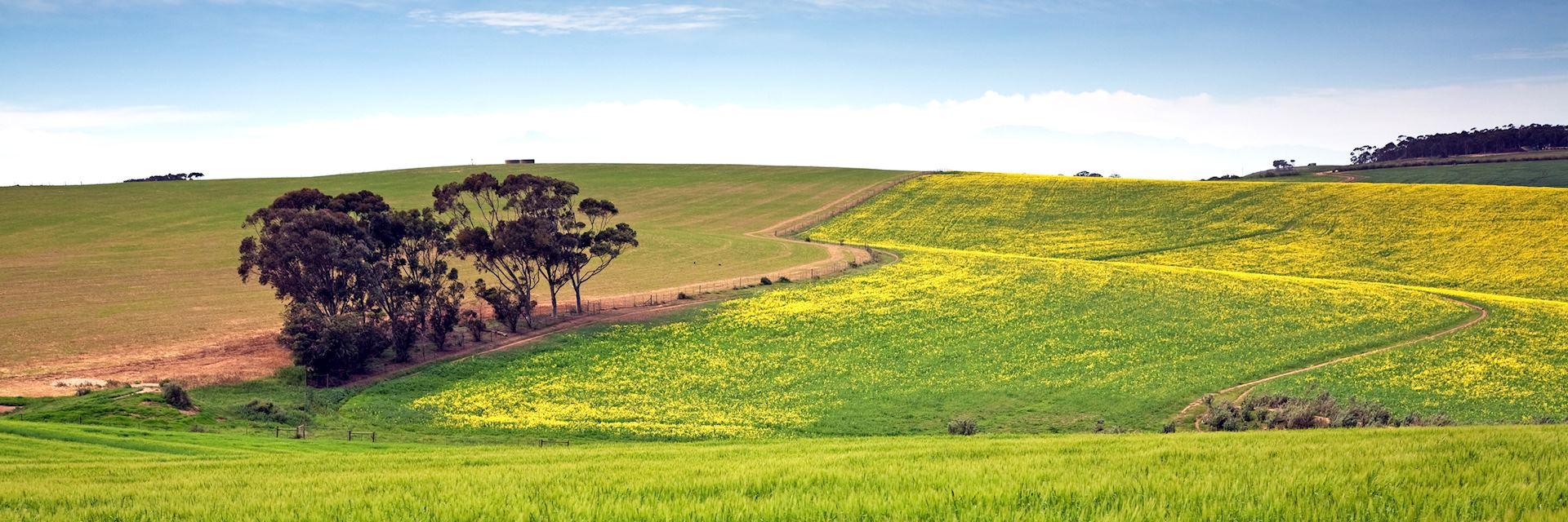 Grain farm in the Overberg