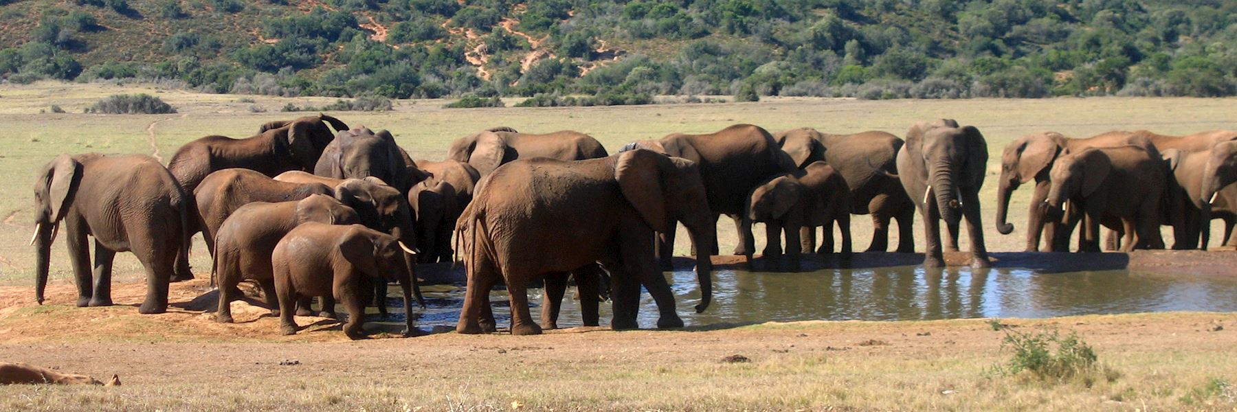Visit Addo Elephant National Park, South Africa
