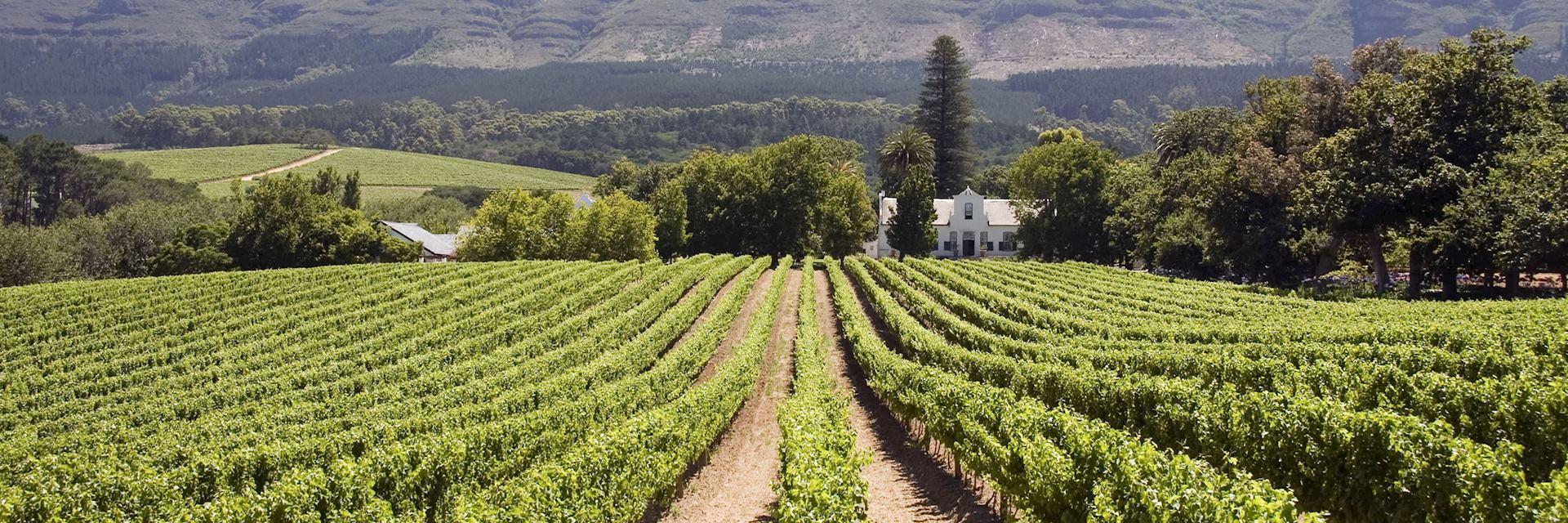 Vineyard, Constantia