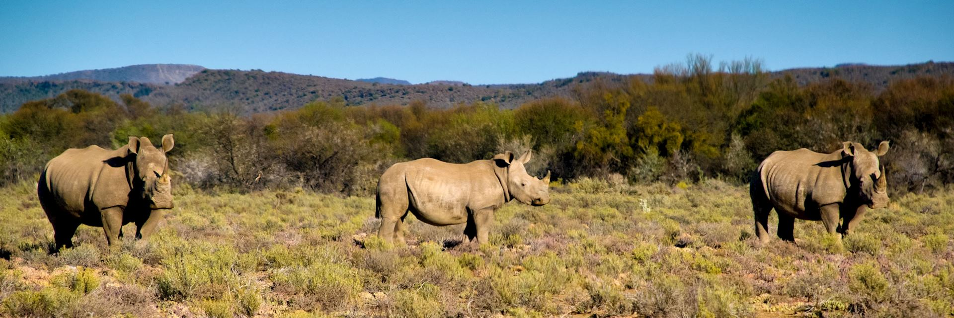 Rhino, Sanbona Game Reserve, Little Karoo