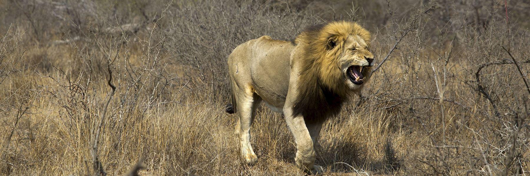 Visit Timbavati Game Reserve, South Africa