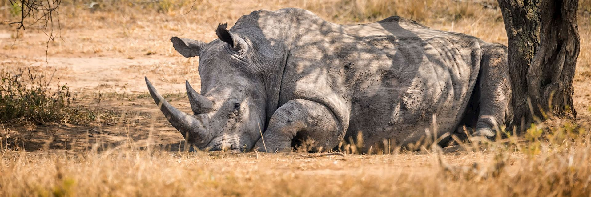 White rhino, Mlilwane National Park, Eswatini