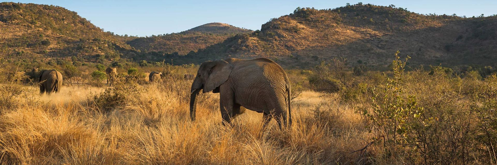 Elephants in Pilanesberg National Park