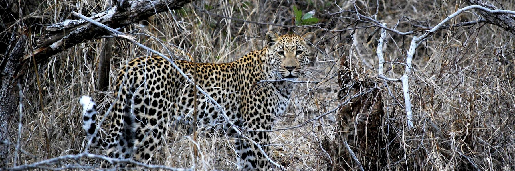 Visit Kwandwe Private Game Reserve, South Africa