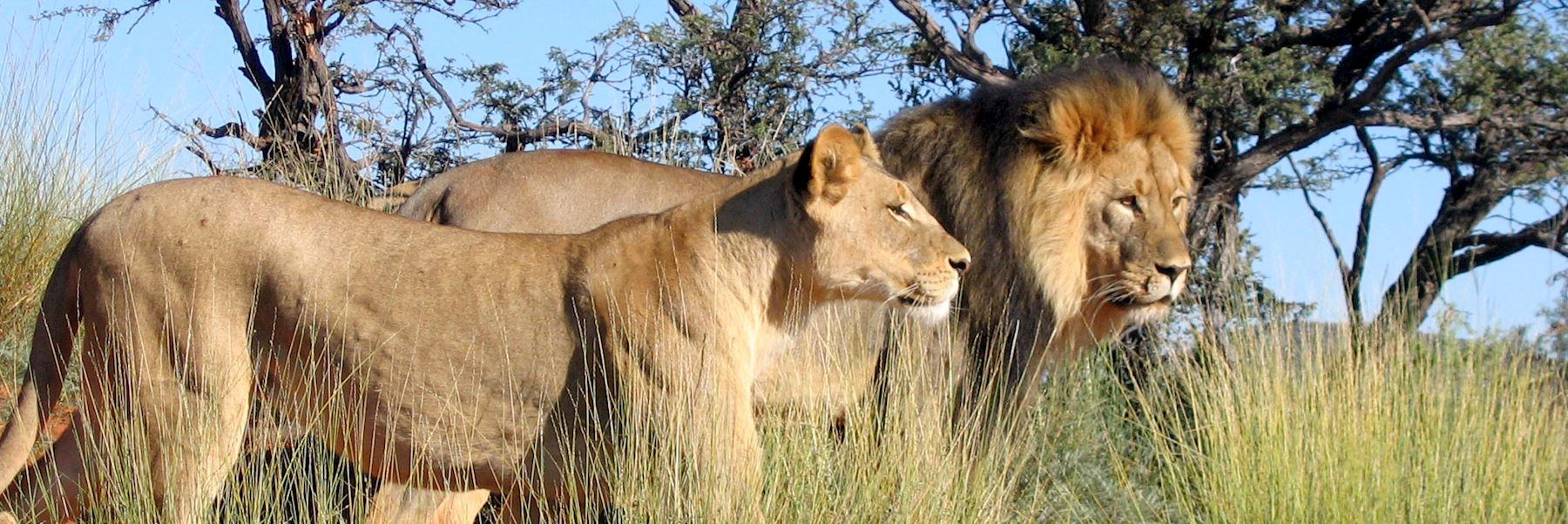 Visit the Kalahari, South Africa