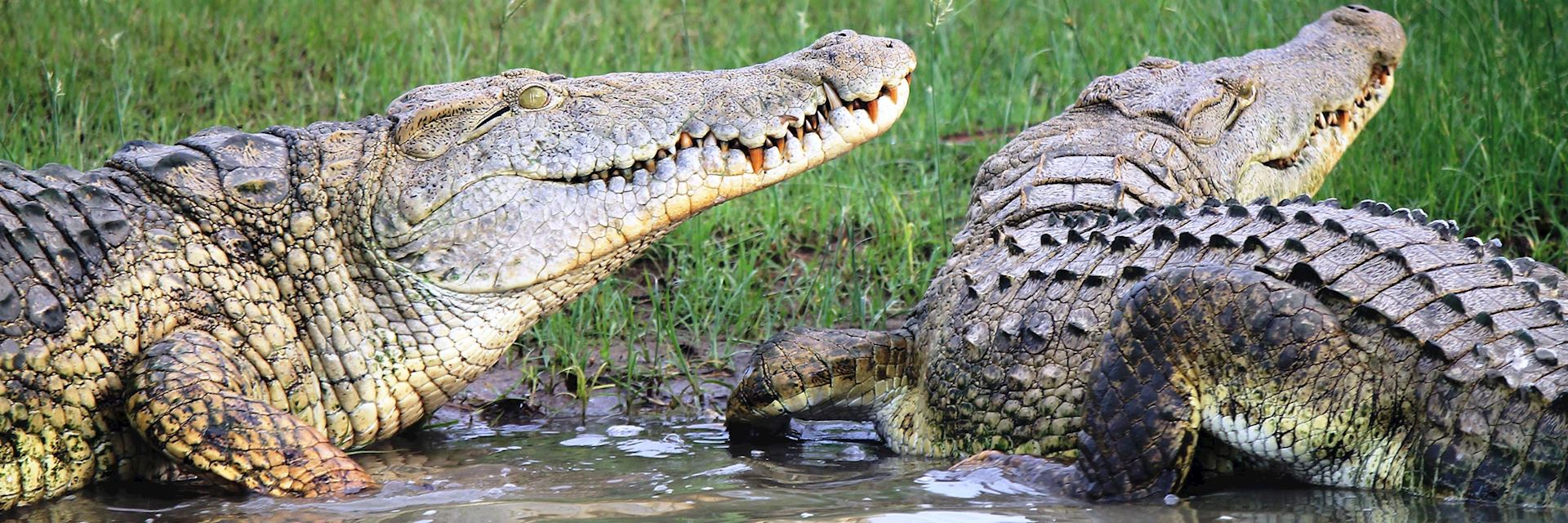Crocodiles in the Selous Game Reserve