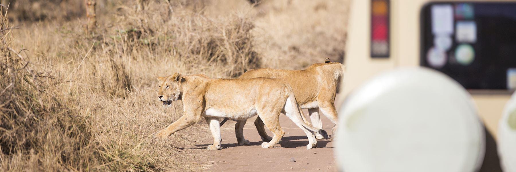Visit Selous Game Reserve, Tanzania