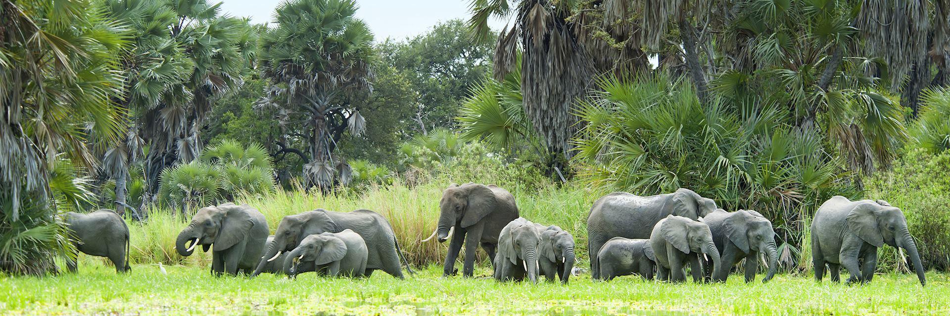 Elephant, Selous Game Reserve